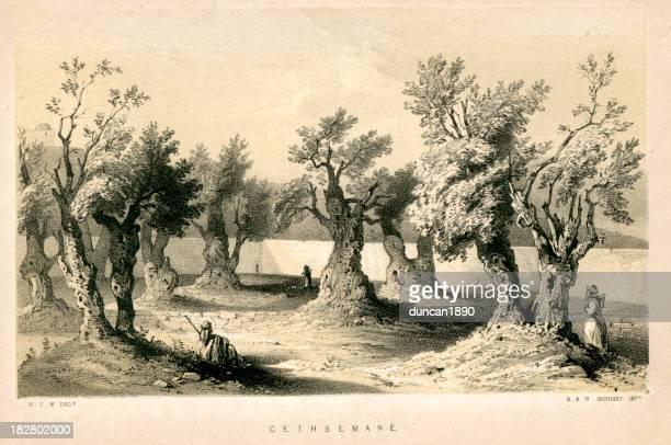ゲッセマネの園 - オリーブの木点のイラスト素材/クリップアート素材/マンガ素材/アイコン素材