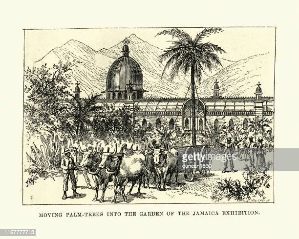 garden of the jamaica international exhibition, 1891 - great exhibition stock illustrations, clip art, cartoons, & icons