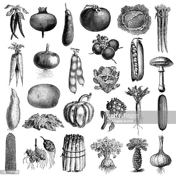 garden vegetable illsutrations | antique farming and food clipart - illustration technique stock illustrations