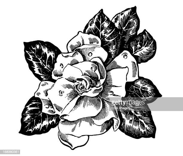 Gardenia Stock Illustrations And Cartoons Getty Images