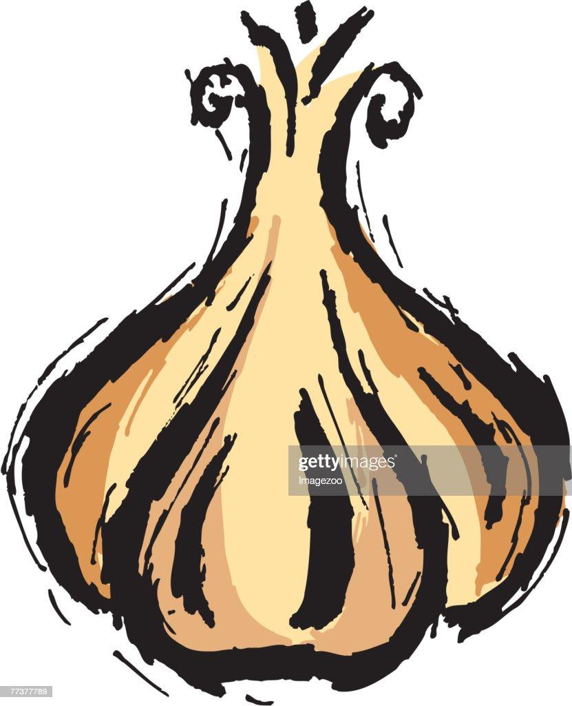 garlic : Illustration