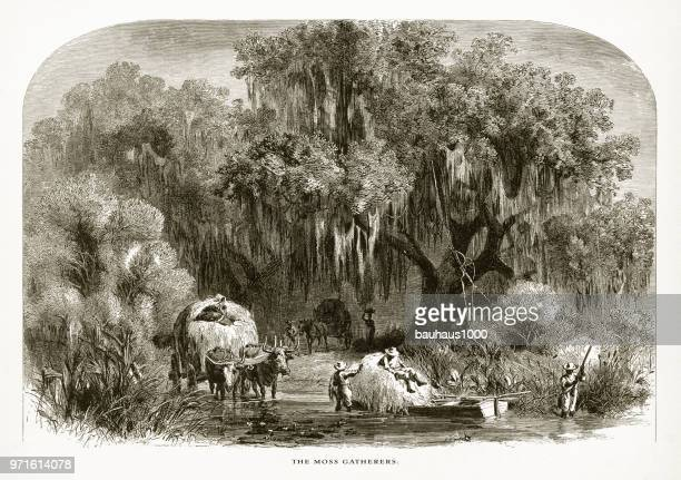 gathering spanish moss in a swamp on the mississippi, louisiana, united states, american victorian engraving, 1872 - southern usa stock illustrations, clip art, cartoons, & icons