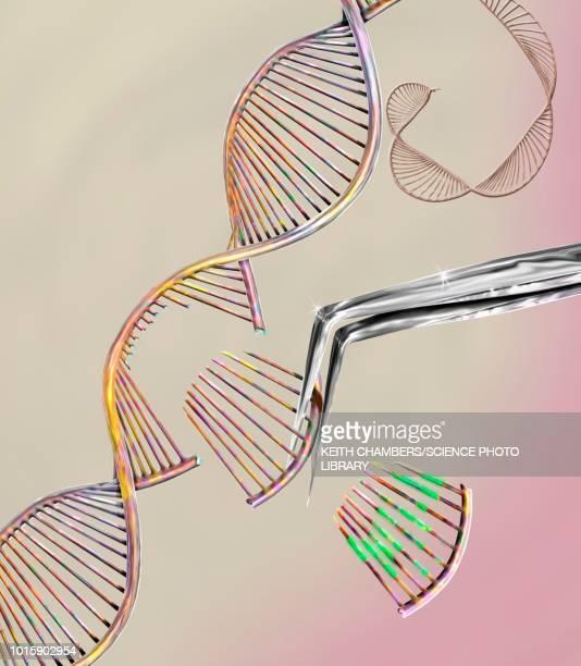crispr gene editing, conceptual illustration - genetic modification stock illustrations, clip art, cartoons, & icons