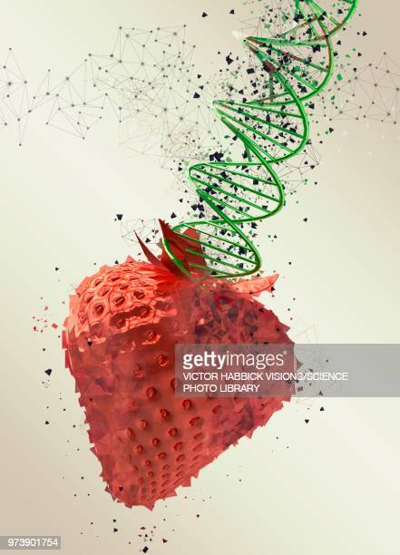genetically modified strawberry, illustration - food and drink stock illustrations
