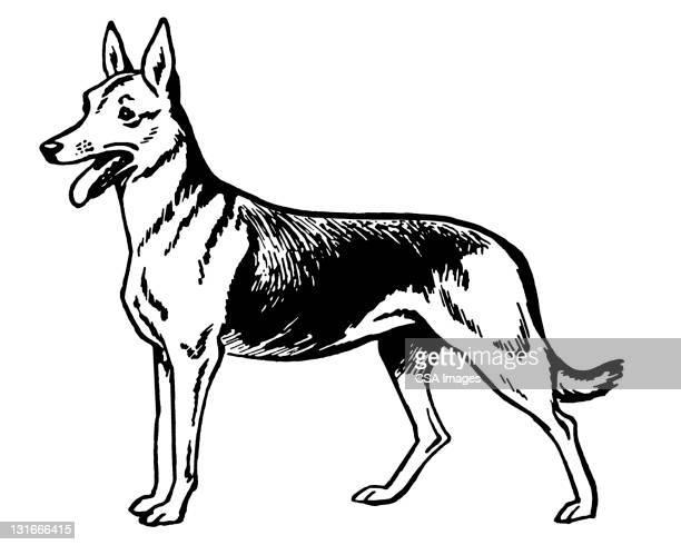 German Shepherd Dog