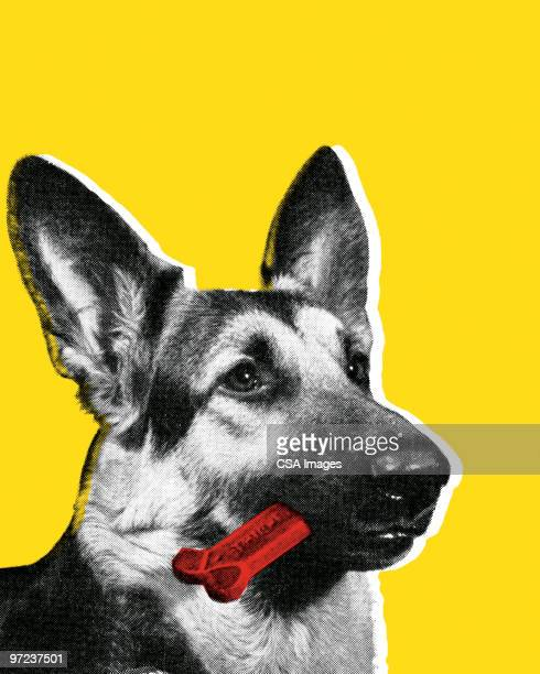 german shepherd dog with bone in mouth - dog bone stock illustrations