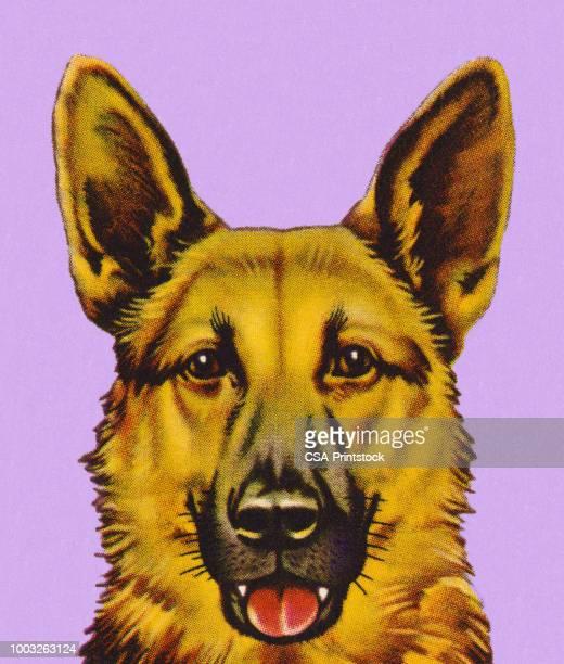 ilustrações, clipart, desenhos animados e ícones de cão pastor alemão  - cão pastor alemão