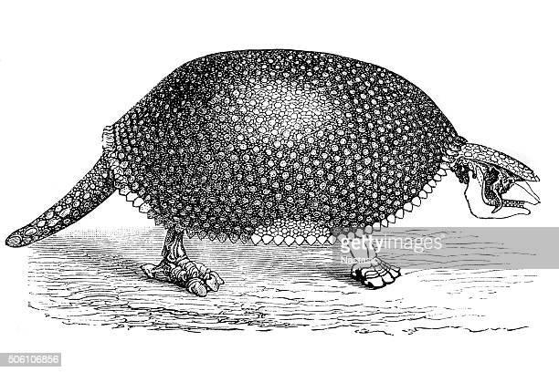 giant armadillo (glyptodon clavipes)