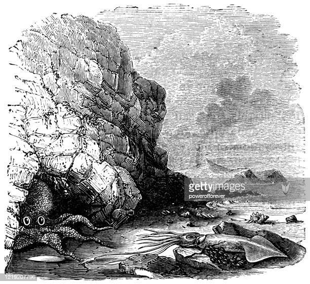 giant pacific octopus and giant squid on the coast of british columbia, canada - 19th century - powerofforever stock illustrations