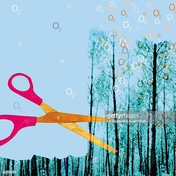 ilustrações de stock, clip art, desenhos animados e ícones de giant scissors cutting down old-growth forest - desmatamento