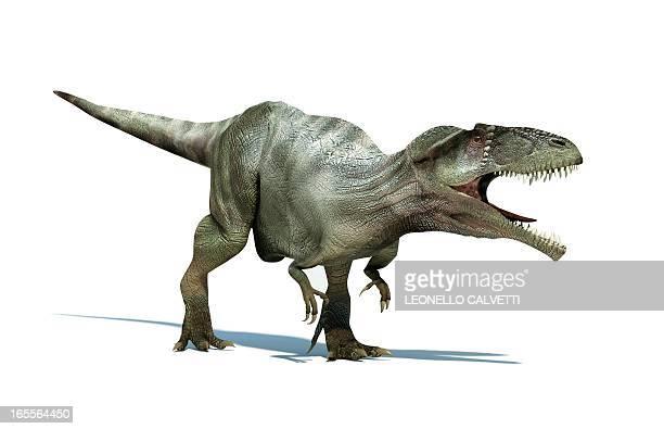 Giganotosaurus dinosaur, artwork