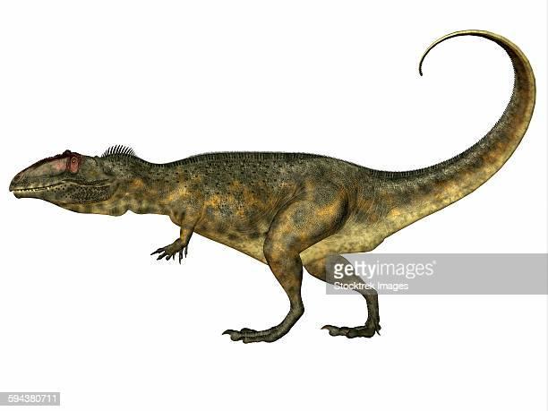 ilustraciones, imágenes clip art, dibujos animados e iconos de stock de giganotosaurus dinosaur, side view. - paleozoología