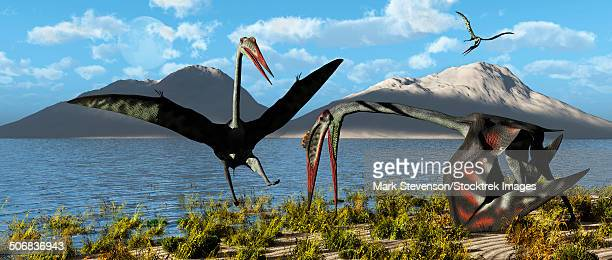 Gigantic Quetzalcoatlus pterosaurs gathering at their traditional breeding grounds during Earth's Cretaceous Period of time.