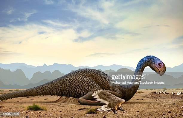 Gigantoraptor, a genus of giant oviraptorosaurian theropod dinosaur from the Cretaceous Period.