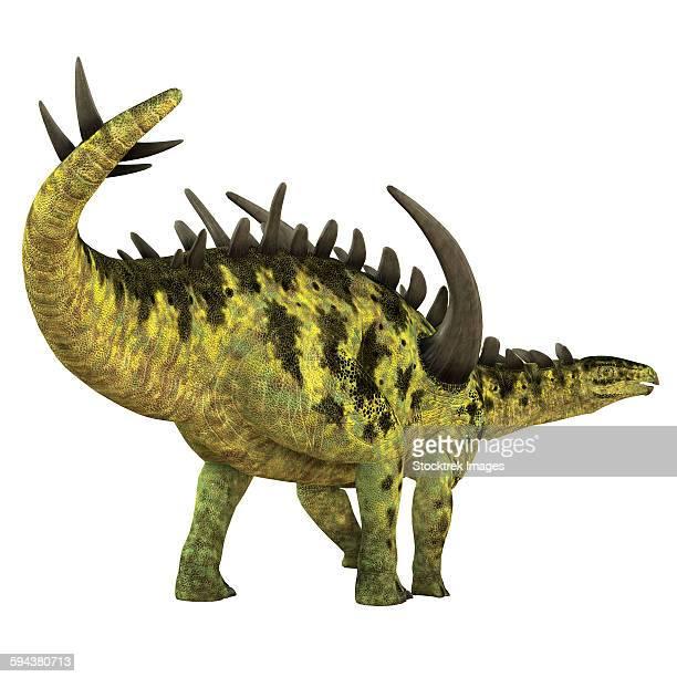 gigantspinosaurus dinosaur, white background. - thyreophora stock illustrations, clip art, cartoons, & icons
