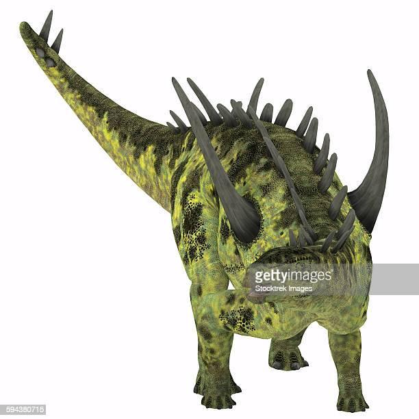 Gigantspinosaurus dinosaur, white background.