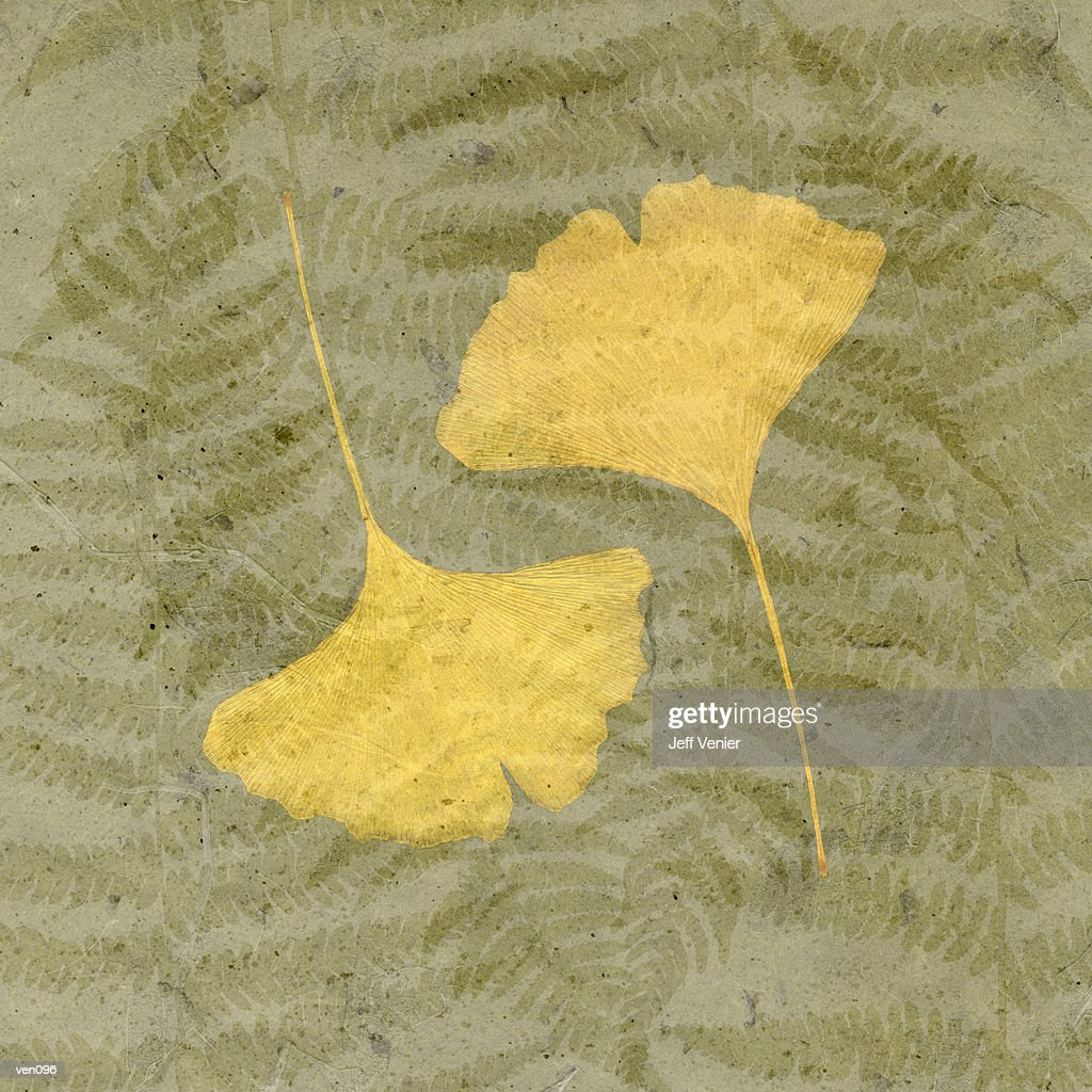 Ginkgo Leaf on Fern Background : Stock Illustration