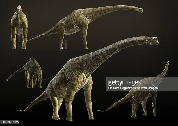 Giraffatitan brancai, a sauropod dinosaur from the Late Jurassic period.