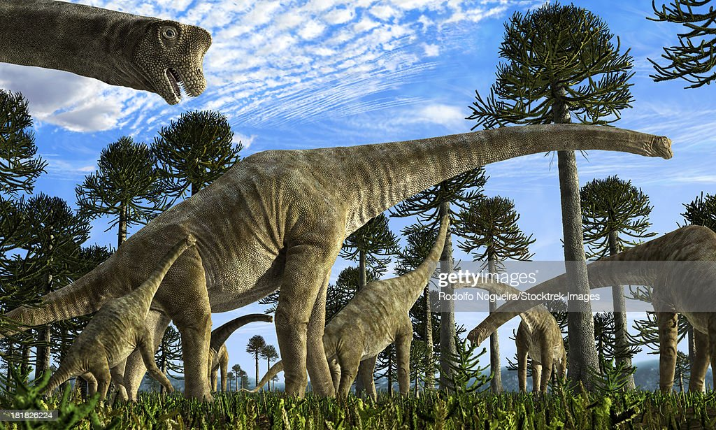 Giraffatitan brancai dinosaurs grazing in a Jurassic environment. : stock illustration