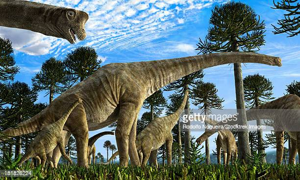 Giraffatitan brancai dinosaurs grazing in a Jurassic environment.