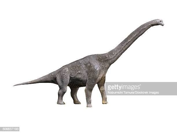 Giraffatitan dinosaur, white background.