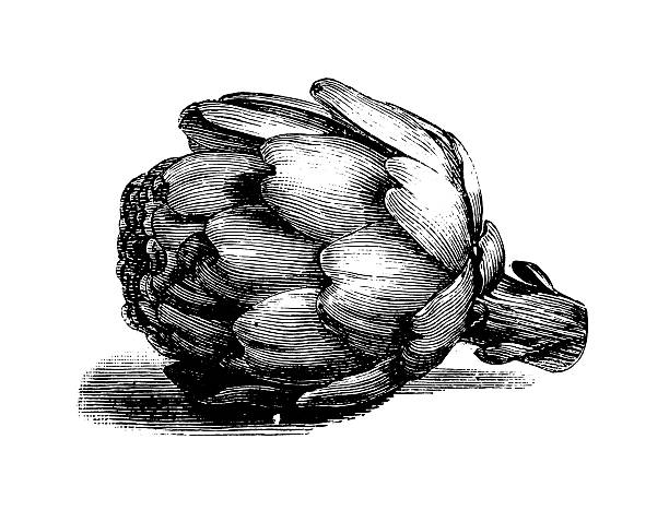 Globe Artichoke | Antique Culinary Illustrations Wall Art