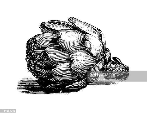 globe artichoke | antique culinary illustrations - france stock illustrations