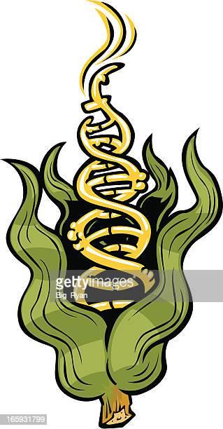 gmo corn dna - genetic modification stock illustrations, clip art, cartoons, & icons