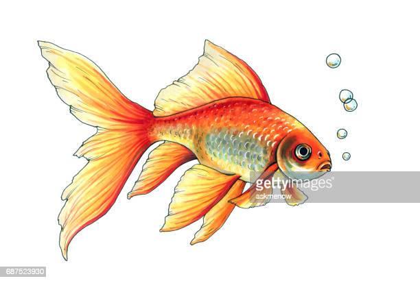 illustrations, cliparts, dessins animés et icônes de poisson rouge - poisson rouge