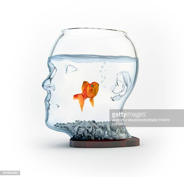 illustrations, cliparts, dessins animés et icônes de goldfish in a bowl, illustration - poisson rouge