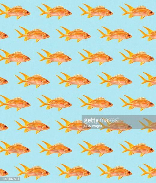 ilustraciones, imágenes clip art, dibujos animados e iconos de stock de patrón de la carpa dorada - grupo grande de animales