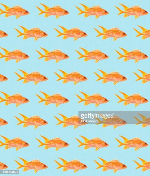 illustrations, cliparts, dessins animés et icônes de motif poisson rouge - poisson rouge