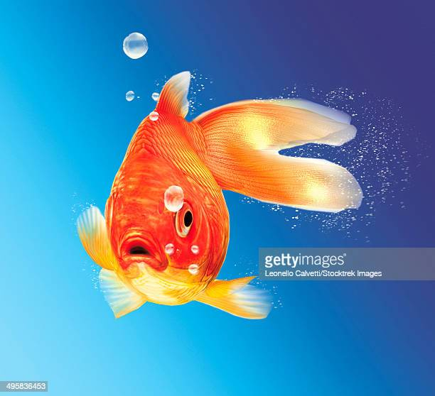 Goldfish with water bubbles.