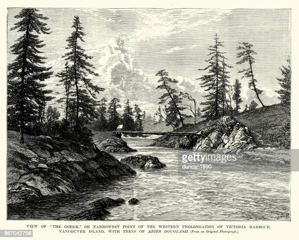Ravinen av västra förlängning av Victoria Herbour, Vancover Island