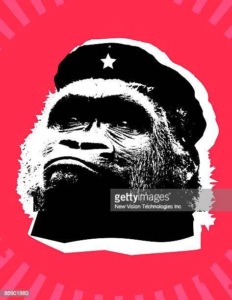 Gorilla wearing military beret