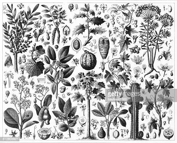 gourd spurge and sumac - apple fruit stock illustrations, clip art, cartoons, & icons