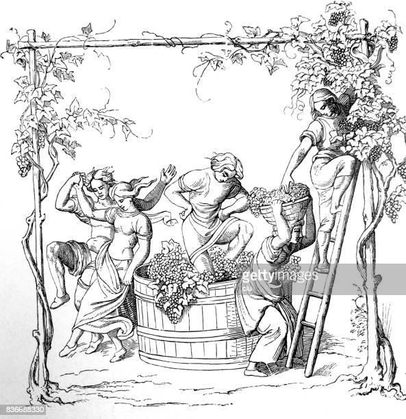 grape harvest - grape stock illustrations, clip art, cartoons, & icons