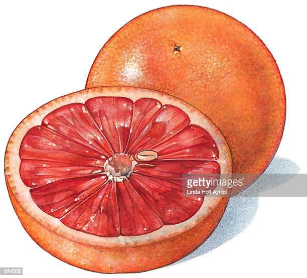 ilustraciones, imágenes clip art, dibujos animados e iconos de stock de grapefruit - pomelo rosa