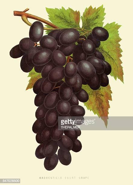 grapes illustration 1874 - grape stock illustrations, clip art, cartoons, & icons