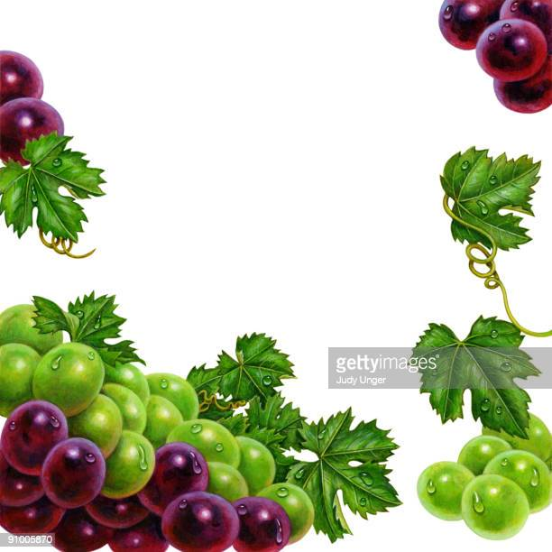 Free Red Grapes Cliparts, Download Free Clip Art, Free Clip Art on Clipart  Library