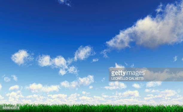 Grass against a blue sky, artwork