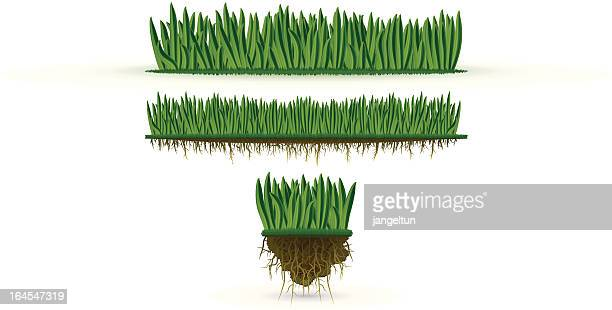grass (high detail) - root stock illustrations, clip art, cartoons, & icons