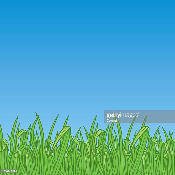 Grass (vector & jpg)