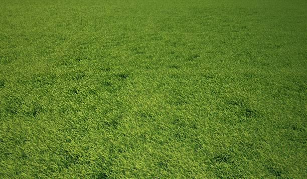 Grass Meadow, Artwork Wall Art
