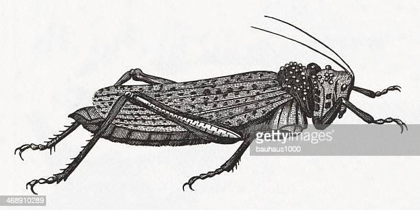 Grasshopper Engraving