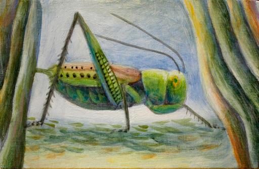 Grasshopper - gettyimageskorea