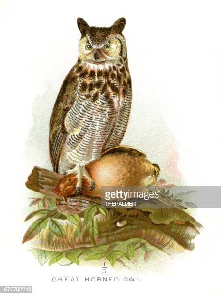 great horned owl lithograph 1897 - great horned owl stock illustrations
