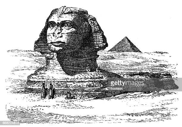 great sphinx of giza - the sphinx stock illustrations, clip art, cartoons, & icons