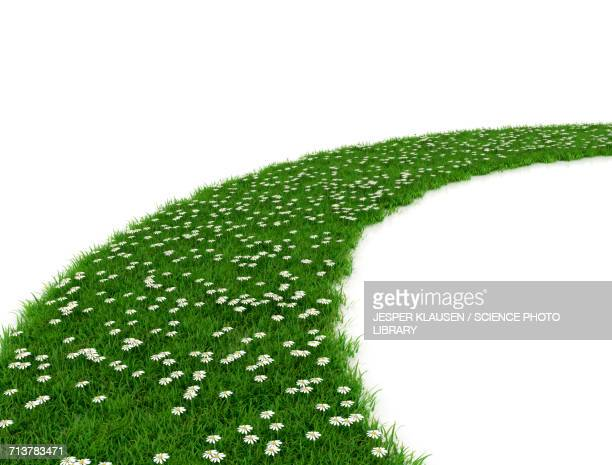 green grass with white flowers - footpath stock illustrations