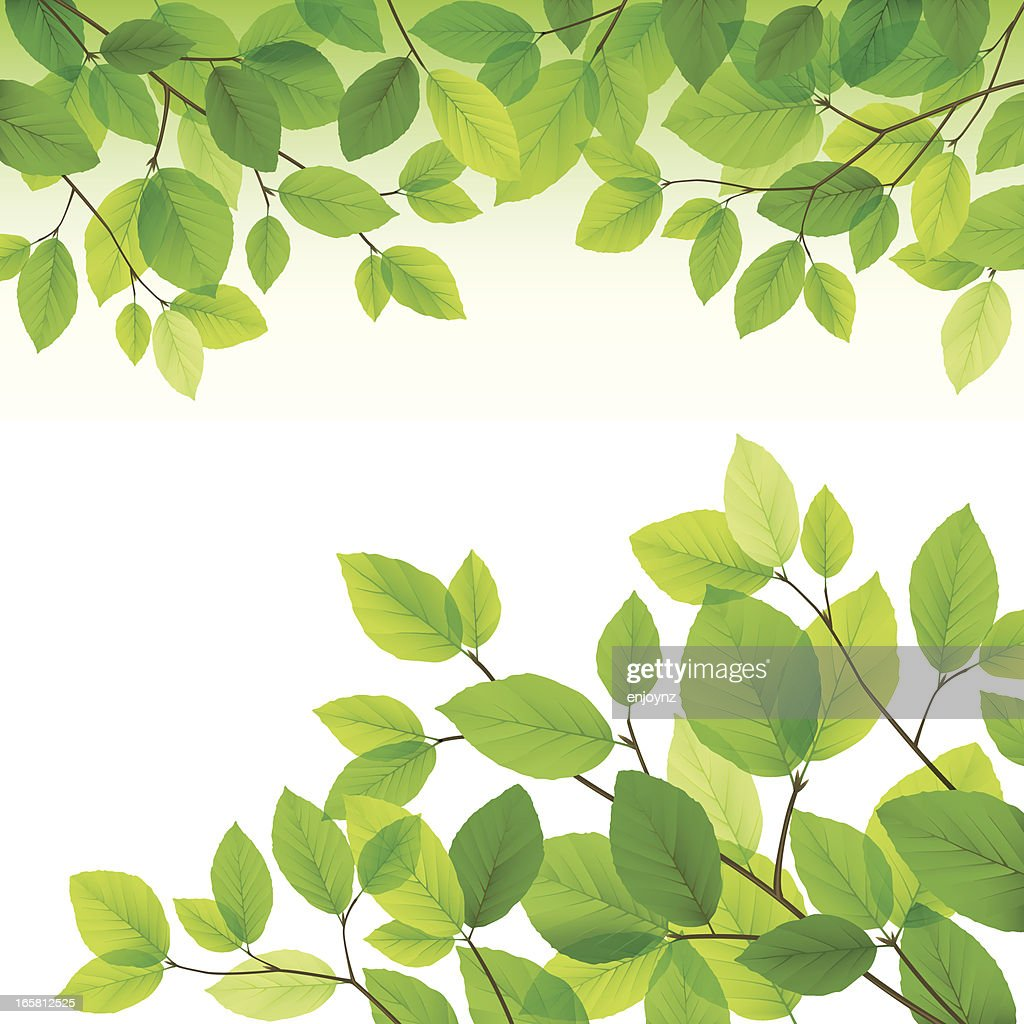 Green leaves background : stock illustration